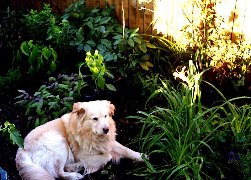 Beyzeng in Garden photo by Nanne Barkdull